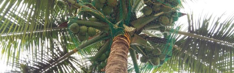 Coconut tree Safety Nets in Bangalore